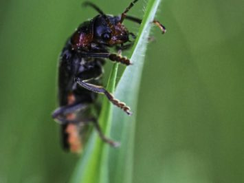 Macro of a bug on a leaf