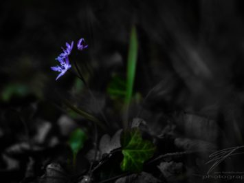 Out of the Dark raises a little flower in spring