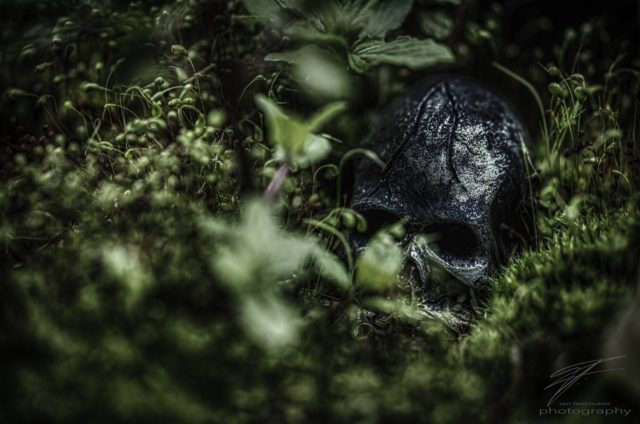 In the Jungle - A skull in the moss