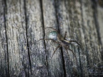 Macro of a spider on wood