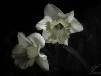 Narcissus in the Dark
