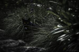 Tiny black Panther